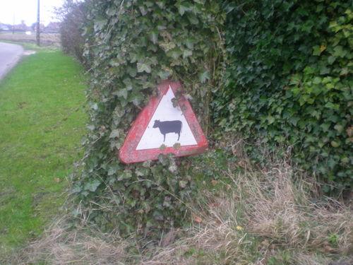 Cowwarning